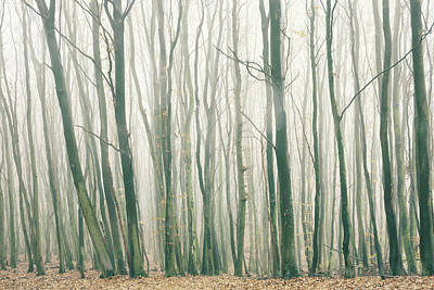 Mellow Yellow - Fog in the Forest by Dorit Fuhg