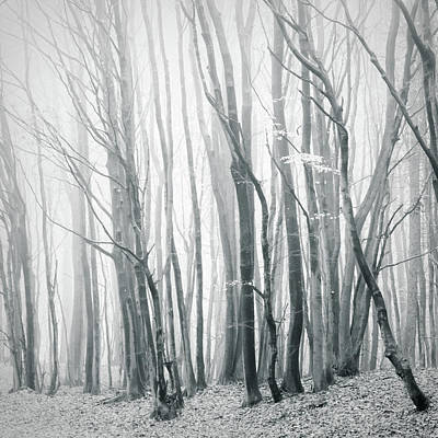 Mellow Yellow - Fog in the Forest II by Dorit Fuhg