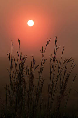 Scott Bean Rights Managed Images - Foggy Morning Bluestem Royalty-Free Image by Scott Bean
