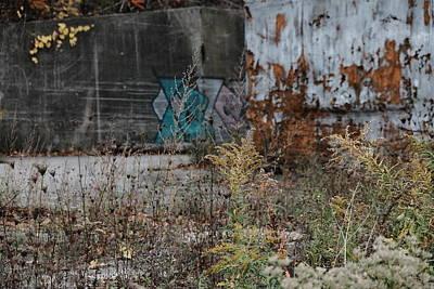 Photograph - Foliage by Kreddible Trout