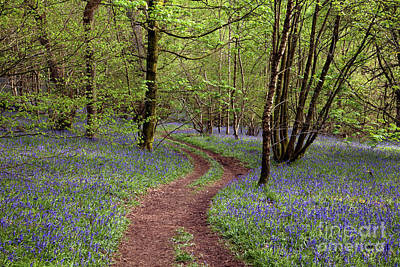 Photograph - Footpath through Flakebridge Wood 2 by Gavin Dronfield