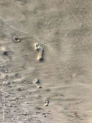 Grace Kelly - Footprints by Roe Rader