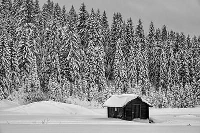 Photograph - Forest cabin by Bez Dan