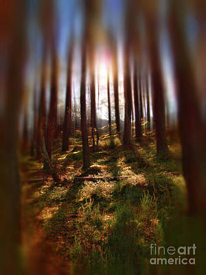 Photograph - Forest Light 9 by Dave Harnetty