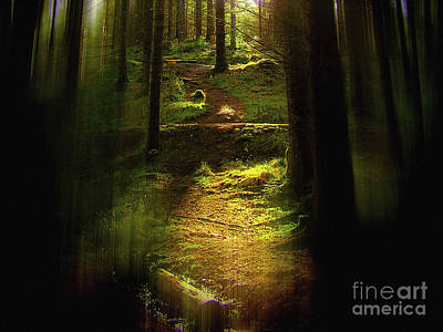 Photograph - Forest Light by Dave Harnetty
