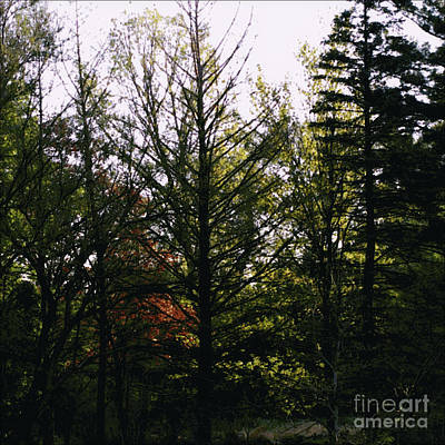 Frank J Casella Royalty-Free and Rights-Managed Images - Forest Morning Light Impressionism by Frank J Casella