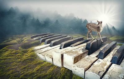 Surrealism Royalty-Free and Rights-Managed Images - Forest piano by Mihaela Pater