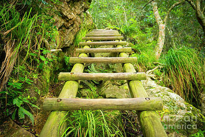 Royalty-Free and Rights-Managed Images - Forest Step Ladder by THP Creative