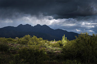 On Trend At The Pool - Four Peaks Saguaro Cactus by Chance Kafka
