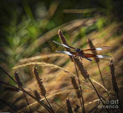 Mistletoe - Four Spot Skimmer by Mitch Shindelbower