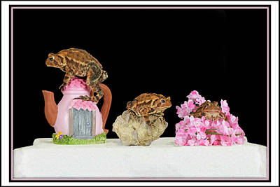 Rose - Fowlers Toad Trio by Constance Lowery