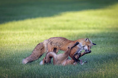 Advertising Archives - Fox Fun 02 by Patti Deters