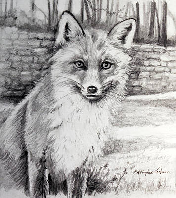 Animals Drawings - Fox in the Yard by Patricia Allingham Carlson