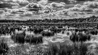 Photograph - Franklin Parker Preserve Pine Lands by Louis Dallara