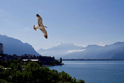 Wild And Wacky Portraits - Free as a bird, Lake Geneva, Montreux, Vaud, Switzerland. by Joe Vella