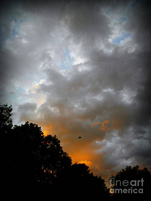 Frank J Casella Royalty-Free and Rights-Managed Images - Free Bird And Sunset Clouds - Photo by Frank J Casella by Frank J Casella