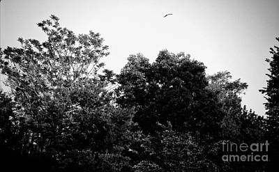 Frank J Casella Royalty-Free and Rights-Managed Images - Free Bird Golden Hour Sunset - Black and White by Frank J Casella