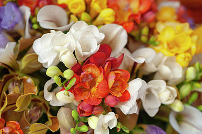 Science Collection - Freesia and Orchids Mixed Bouquet by Jenny Rainbow