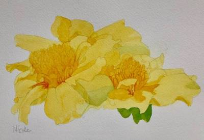 Royalty-Free and Rights-Managed Images - French Marigold by Nicole Curreri