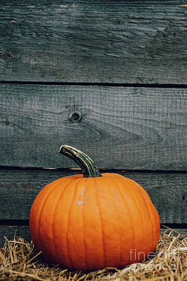Have A Cupcake - Fresh pumpkin on wood background. Halloween and Thanksgiving by Michal Bednarek