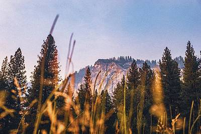 Royalty-Free and Rights-Managed Images - From Yellow to Orange - Yosemite National Park, Yosemite National Park, United States by Julien