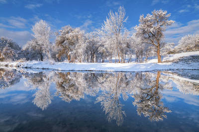 Royalty-Free and Rights-Managed Images - Frosted Trees by Darren White