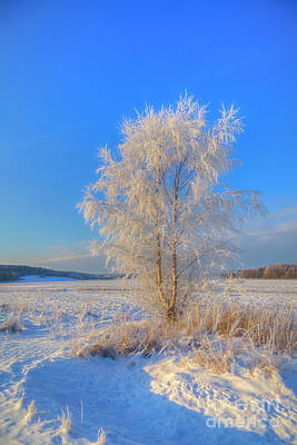 Royalty-Free and Rights-Managed Images - Frosty morning 2 by Veikko Suikkanen