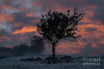 1-war Is Hell Royalty Free Images - Frosty Sunrise At Chasewater Country Park Royalty-Free Image by Rawshutterbug