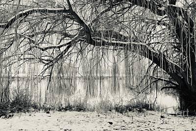 Moody Trees - Frosty Willow Tree in Winter by Carol Groenen