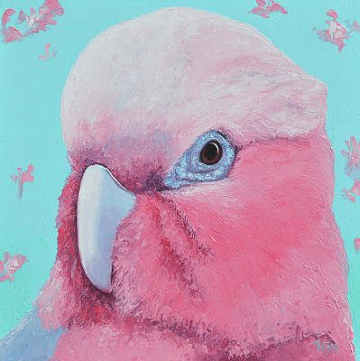 Royalty-Free and Rights-Managed Images - Galah Cockatoo by Jan Matson