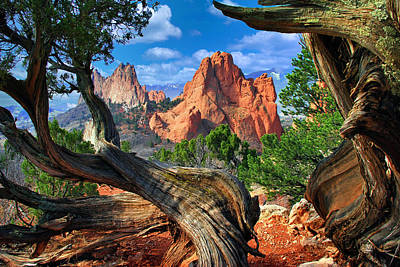 Landscapes Photos - Garden framed by twisted Juniper Trees by John Hoffman