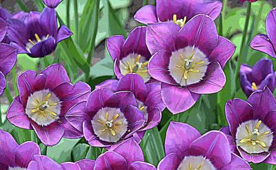 Paul Mccartney - Garden Tulips Pop Art by Maria Keady