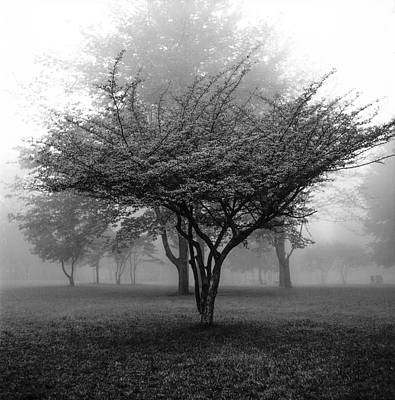 Comedian Drawings Rights Managed Images - Garfield Park Trees in the Morning Mist  Royalty-Free Image by Randall Nyhof