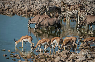 Animals Photos - Gathering at the Watering Hole in Namibia by Mike Reid