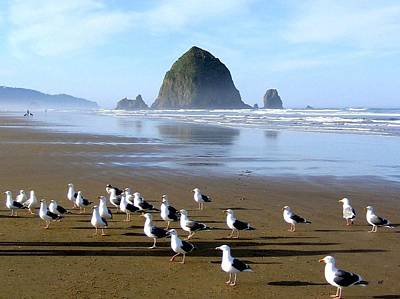 Animals Photos - Gathering Of The Gulls by Will Borden