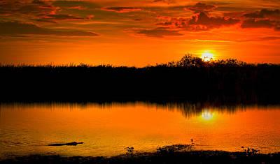 Mellow Yellow - Gator Sunset by Mark Andrew Thomas