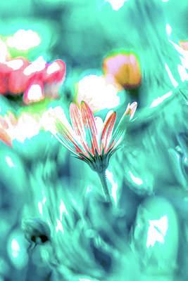 Mixed Media Royalty Free Images - Gazania Dreams 1 Royalty-Free Image by Linda Brody