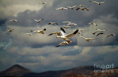 Featured Tapestry Designs - Geese in Dramatic Skies by Ruth Jolly