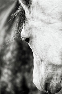 Photograph - Gentle by Shelley Paulson