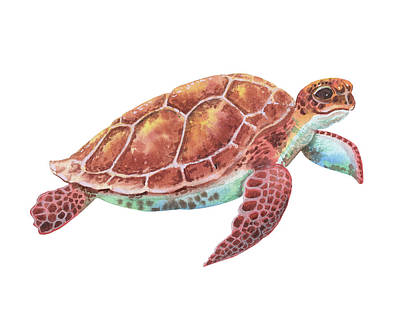 Albert Bierstadt - Giant Baby Sea Turtle Watercolor Painting  by Irina Sztukowski