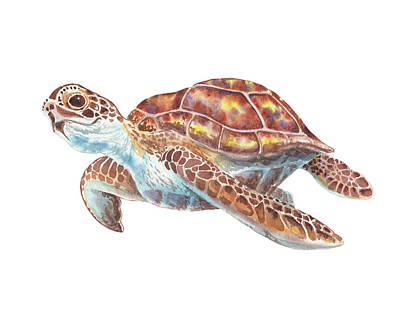 Albert Bierstadt - Giant Sea Turtle Watercolor Painting  by Irina Sztukowski