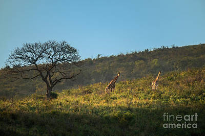 Cartoons Tees - Giraffe Hill by Jamie Pham
