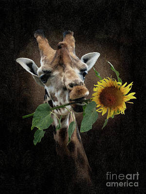 Digital Art - Giraffe With Sunflower by Babette Van den Berg
