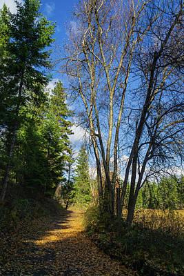 Photograph - Glenmore Highlands Fall Trail by Dave Matchett