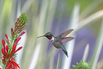 Comic Character Paintings - Glittering Hummingbird by Debbie Oppermann