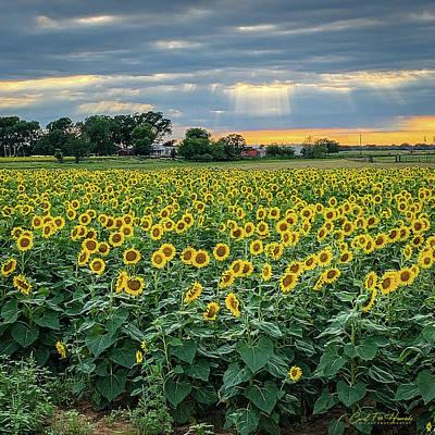 Photograph - God Light Over the Fields by Carol Fox Henrichs