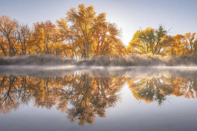 Royalty-Free and Rights-Managed Images - Gold In the Trees by Darren White