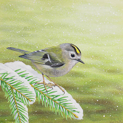 Painting - Goldcrest in the snow by Craig Austin