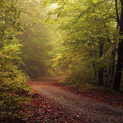Patriotic Signs - Golden Autumn by Evgeni Dinev