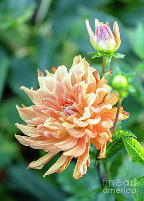 Wild Weather - Golden Dahlia and Bud by Janice Noto